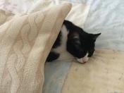 Our Cat Sasha taking things easy