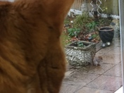 Eddie the cat keeps watch over Cyril the squirrel