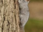 Squirrels!