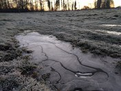 Unusual ice patterns in frozen puddles