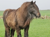 Very large wild looking horse....