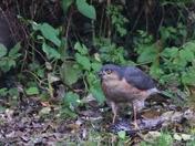 Wildlife in Norfolk