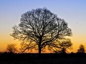 Frosty sunrise tree