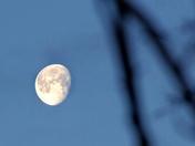 Bright morning moon