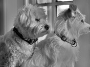My dogs Eddie & Elsie