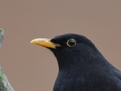 Garden birds look perfect 'Close Up'