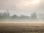 Wensum Mist