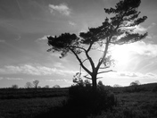 Black and White: Lone Tree