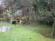 Flooding in a town garden