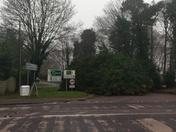 Tree down, blocking Brand road. Opposite the Bunbury arms Great Barton.