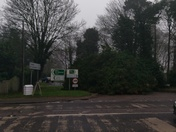 Tree down, blocking Brand road. Opposite the Bunbury arms Great Barton.