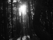 Black and White : Glint of sunshine