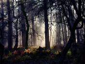 Morning sunlight in the woods