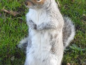 Squirrels at the park.