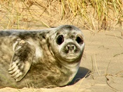 Not another seal photo!