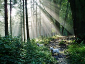 Sunshine in the woods.