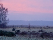 Frosty and foggy common