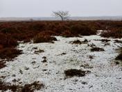 A snowy start on roydon common