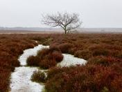 A wintery roydon common