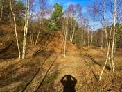 Tree shadows and me