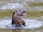Otterley gorgeous