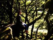 Wistmans Wood - Dartmoor