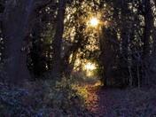 Sunlit woodland walk
