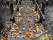Autumn in Eggesford Forest, North Devon