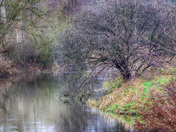 Winter colour on the Little Ouse