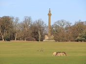Scenes from Holkham Park