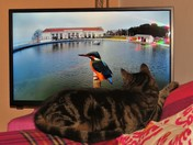 Eric the cat enjoying last in the series of Winterwatch
