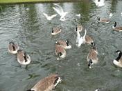 Wild life in Valentine Park Ilford