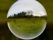 Taverham Marshes
