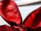 Something Red: Pot Pourri