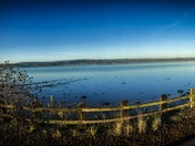 Estuary from extinction station