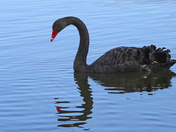 Saturday at Lackford Lakes