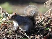 Squirrels...