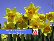 📸 PHOTO CHALLENGE: Signs of Spring 📸