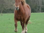 Galloping (photo challenge)