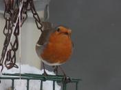 Birds and winter wonder land
