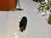 Cat walk in snow!