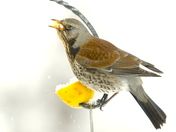 Birds from my kitchen window this morning,