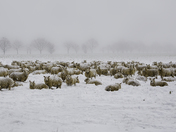 Flock of wooly jumpers !