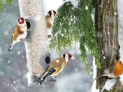 Birds in the snow.