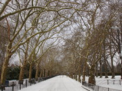 "Barking Park meets ""The Beast from the East"""