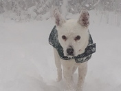 our Snow dog Ziggi