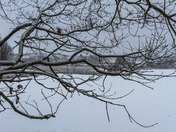 Winter Walkabout