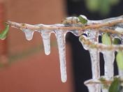 icicle's chulmleigh