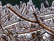 Frozen Clematis