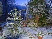 Winter in Ashcombe Park